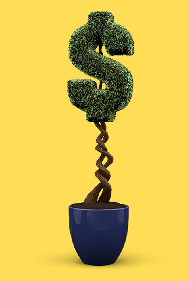 Hedge shaped like a dollar sign on yellow background