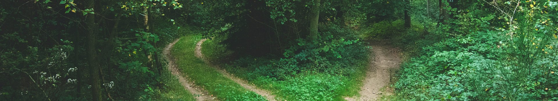 Forked Forest Path 1920X350